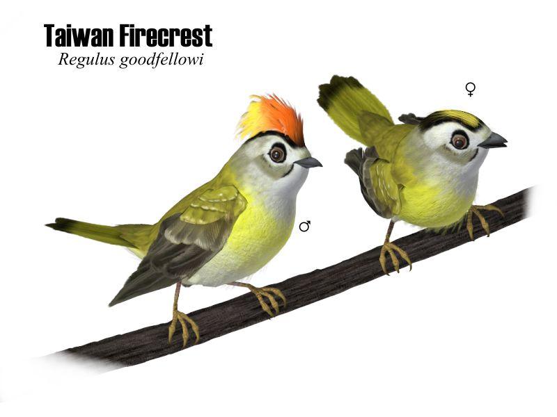 SongbirdReMixWiki
