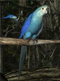"Spix's Macaw from the Songbird ReMix series.  Spix's Macaws were the stars of the ""Rio"" animated films"